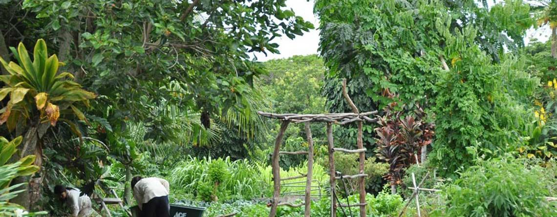 HAWAII Gingerhill Farm